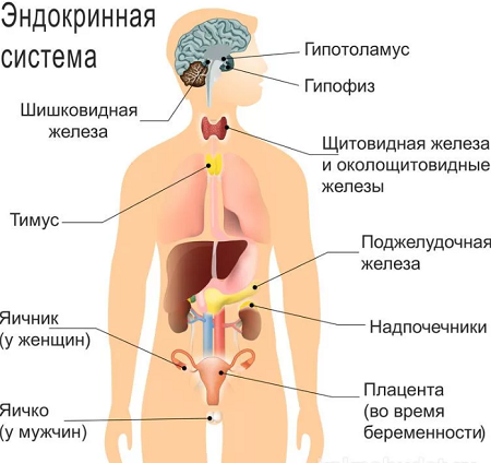 Нарушения и заболевания эндокринной системы: список болезней, причины, симптомы