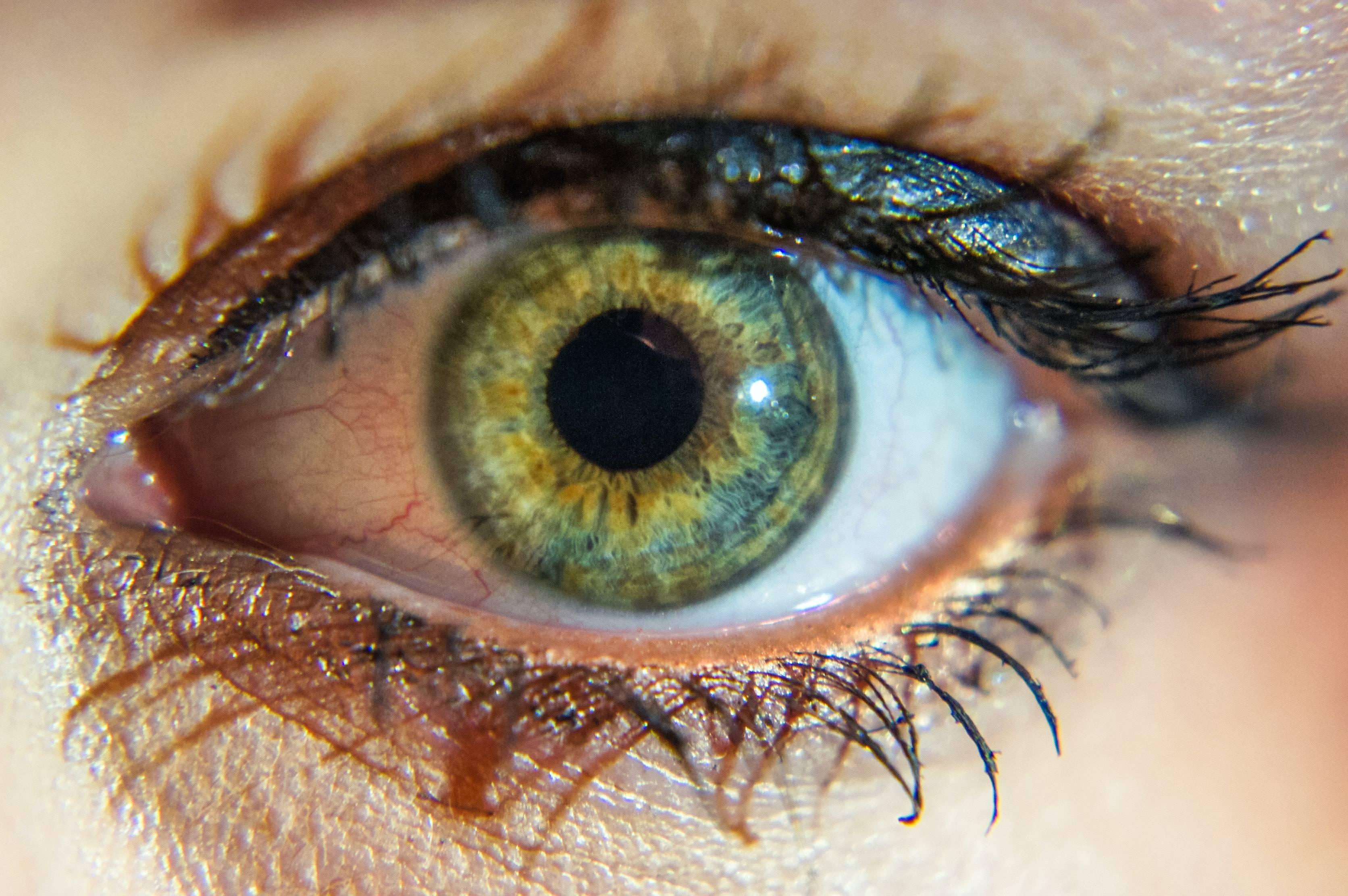 Основные функции радужной оболочки зрительного органа