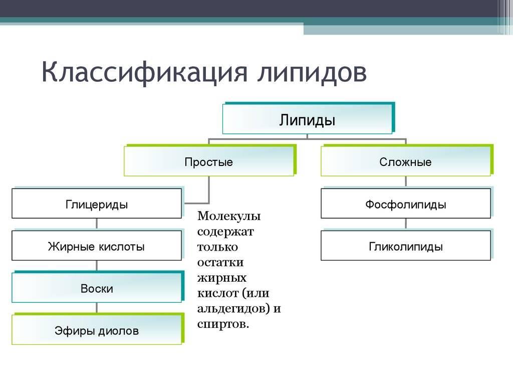 Липиды - что это такое? классификация. обмен липидов в организме и их биологическая роль