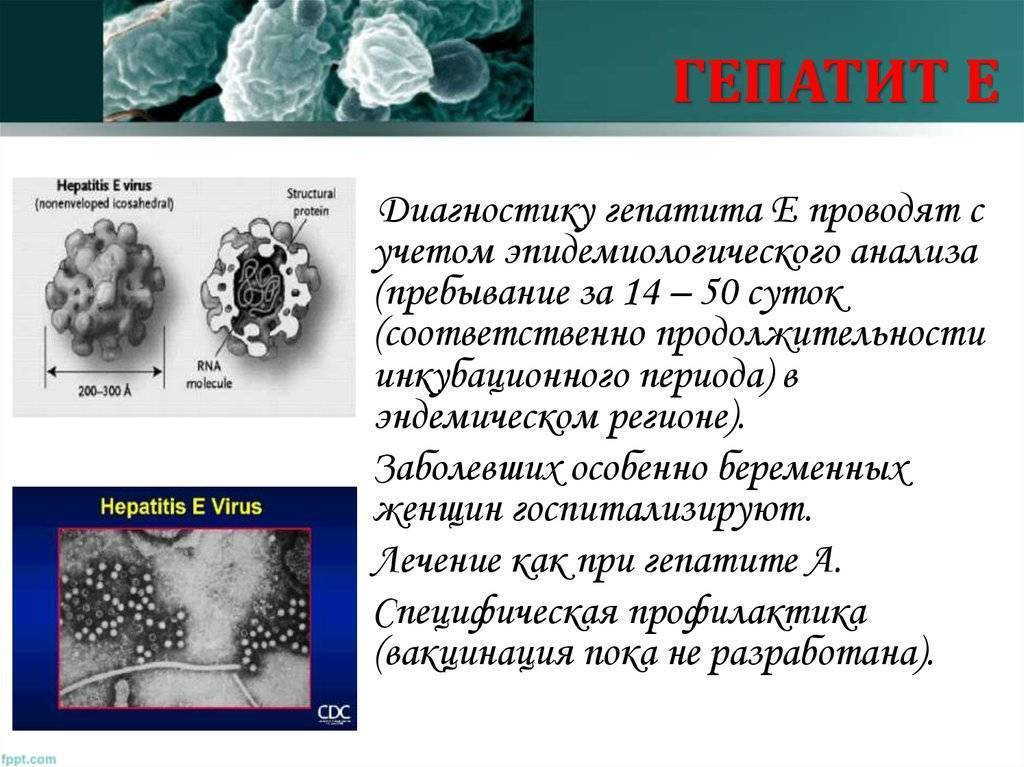 Особенности развития гепатита e, его симптомы и методы лечения