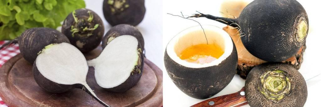 Рецепт приготовления редьки с медом от кашля