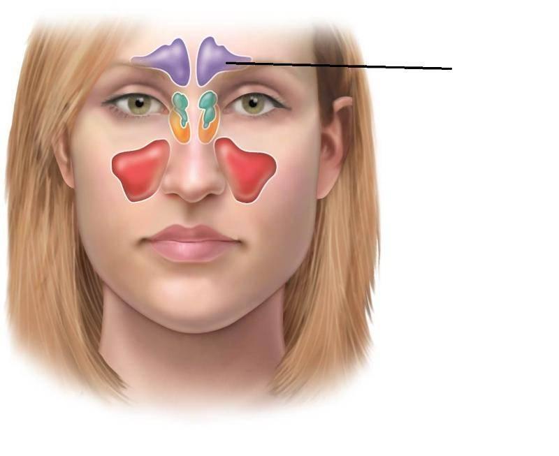 Этмоидит — формы, симптомы и лечение у взрослых, препараты