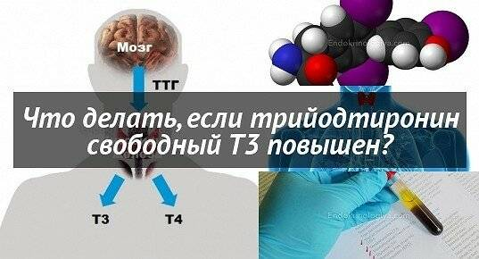 Т3 свободный: за что отвечает, анализ, норма, отклонения (повышен, понижен)