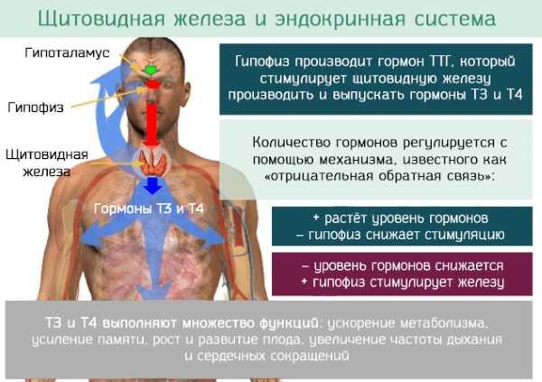 заболевания эндокринной системы симптомы