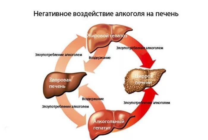 Как алкоголь влияет на печень человека: симптомы болезней и их лечение