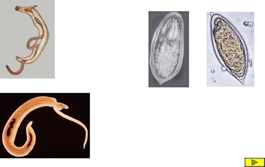 Чем лечить мочеполовой шистосомоз?