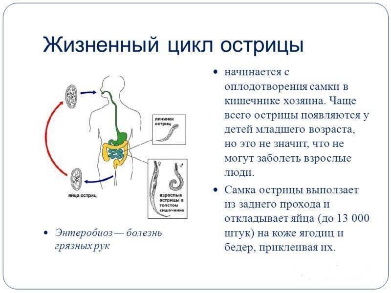 Энтеробиоз - симптомы болезни, профилактика и лечение энтеробиоза, причины заболевания и его диагностика на eurolab