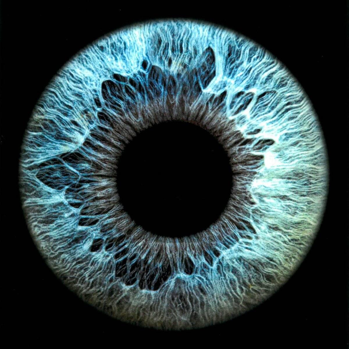 какой структурой глаза образована радужка