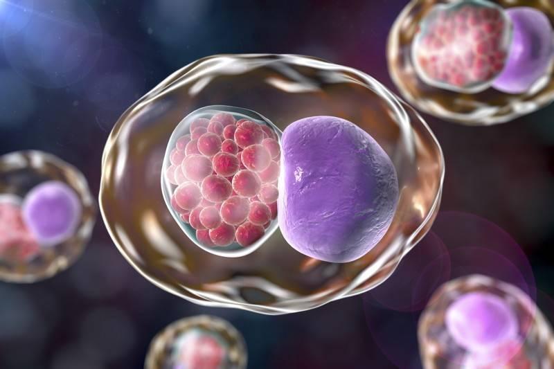 Хламидиоз: симптомы и схема лечения хламидиоза у мужчин и женщин - анализ на хламидиоз, признаки заражения