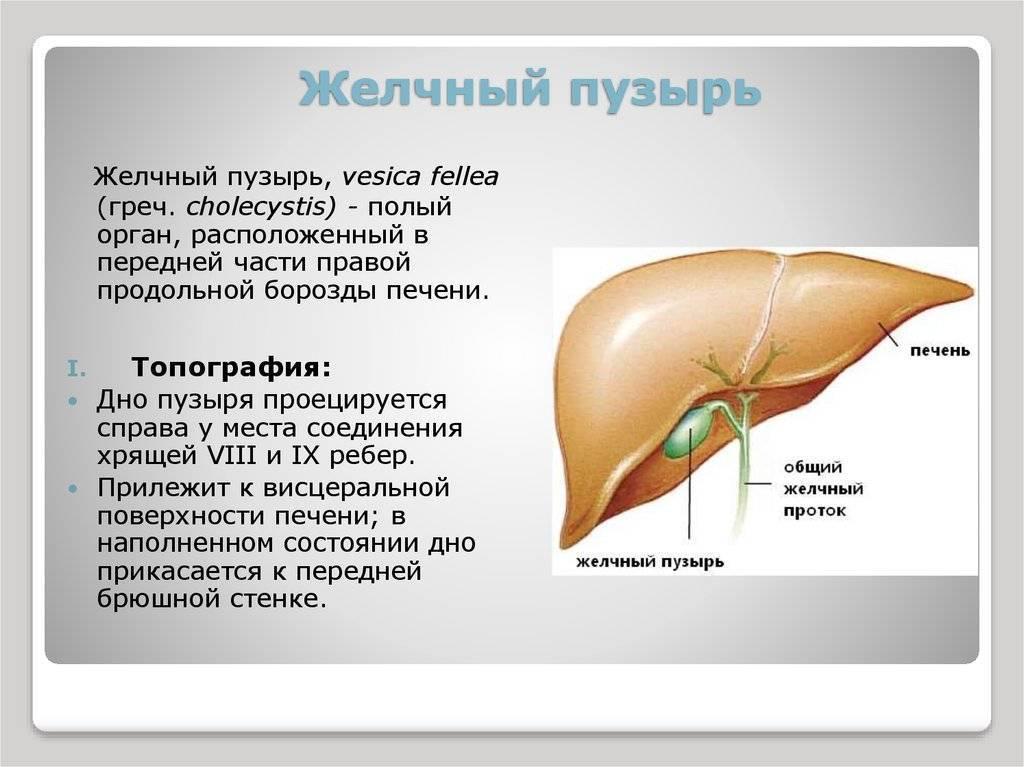 Диета при застое желчи. топ 8 запрещённых продуктов при холестазе — доктор екатерина егорова 2020 апрель