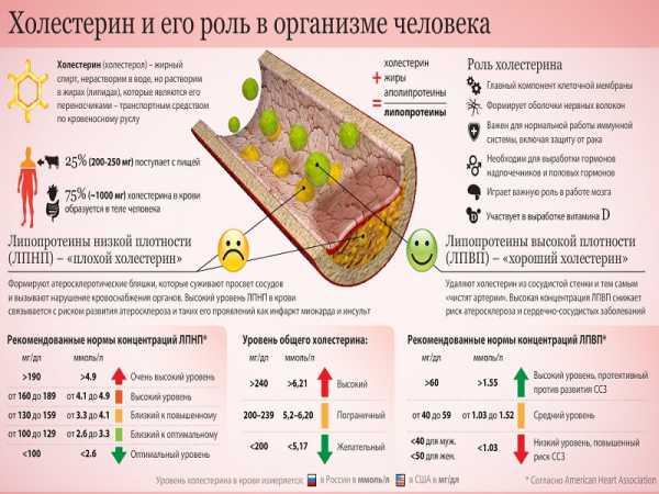 холестерин растительные жиры