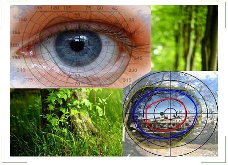 Боковое зрение - развитие и тренировка на специальных тренажерах