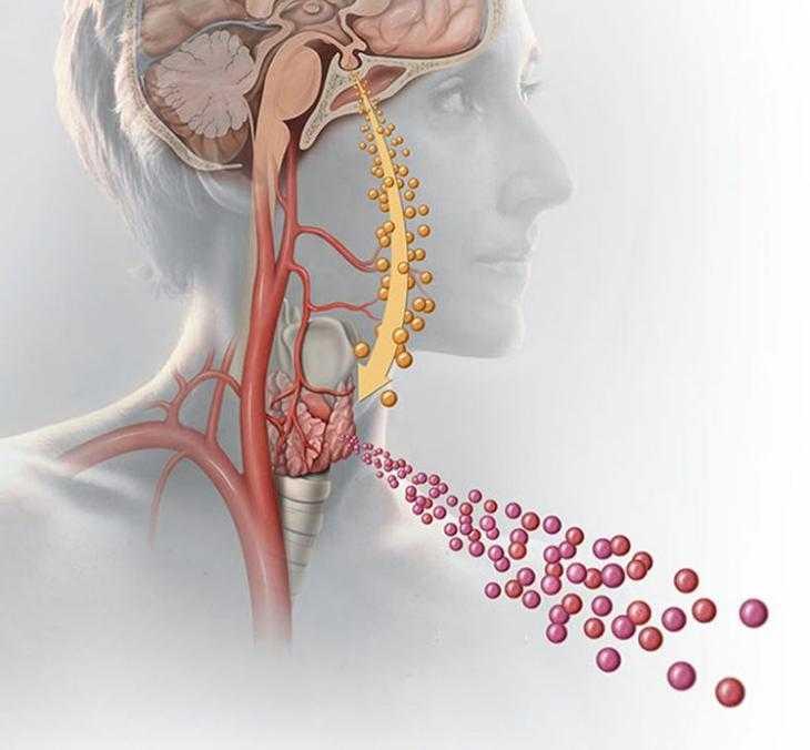 гипертония и щитовидная железа