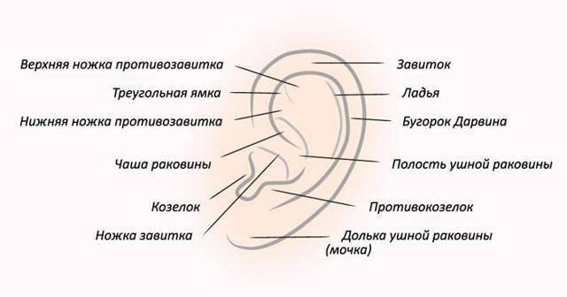 У уха болит козелок уха при надавливании