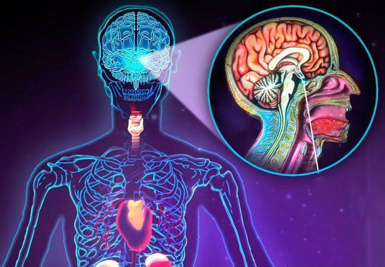 железы эндокринной системы