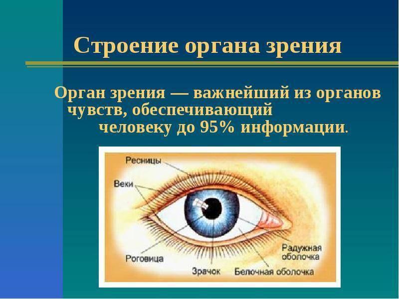 """Презентация на тему: """"презентация на тему : анатомия и физиология органа зрения."""". скачать бесплатно и без регистрации."""