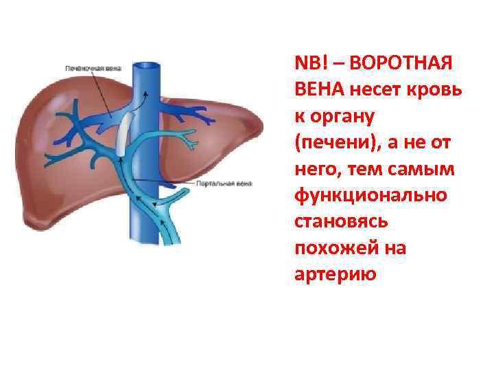 Лимфаденопатия шейных лимфоузлов: что это такое, причины и виды нарушения, симптоматика, методы лечения