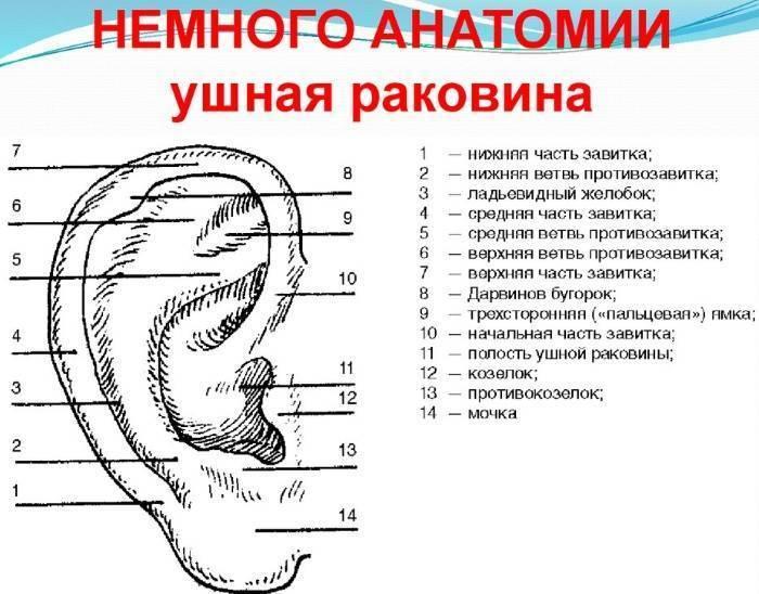 У уха болит козелок уха
