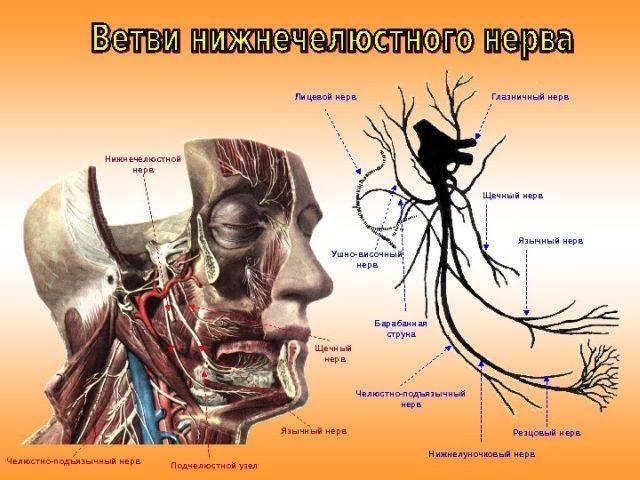 Невралгия языкоглоточного нерва: причины заболевания, основные симптомы, лечение и профилактика