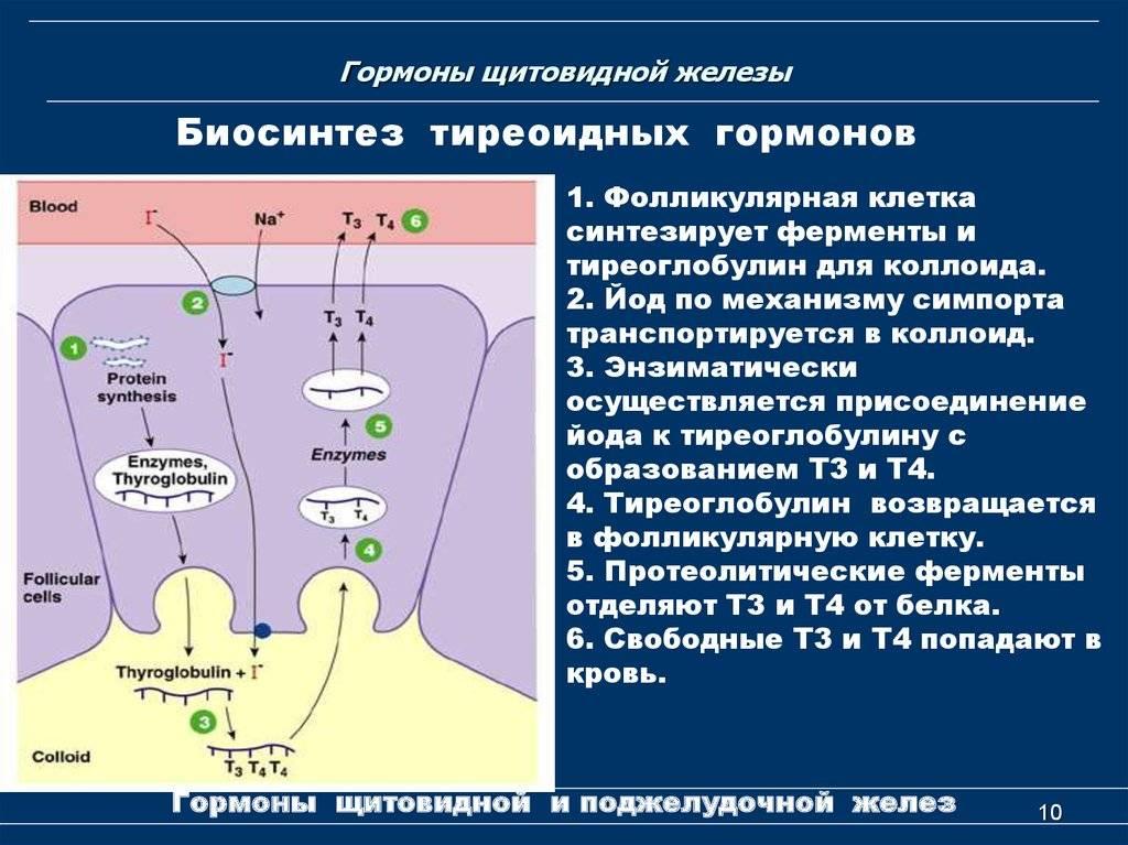 Гормональные препараты для щитовидной железы