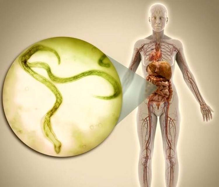 Гименолепидоз — как сдать анализ