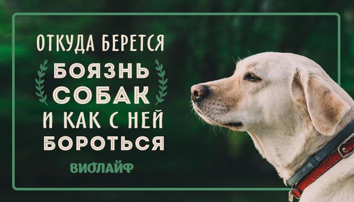 Кинофобия: симптомы и причины, как избавиться от страха перед собаками, лечение