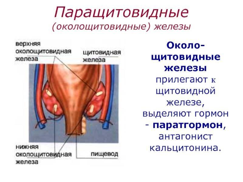Особенности симптомов и лечения при аденоме околощитовидных желез