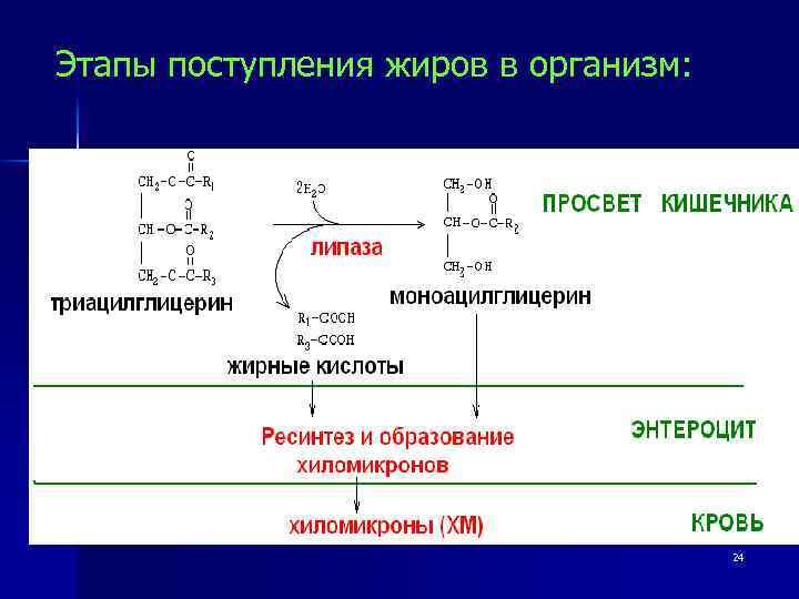 перекисное окисление липидов мембраны