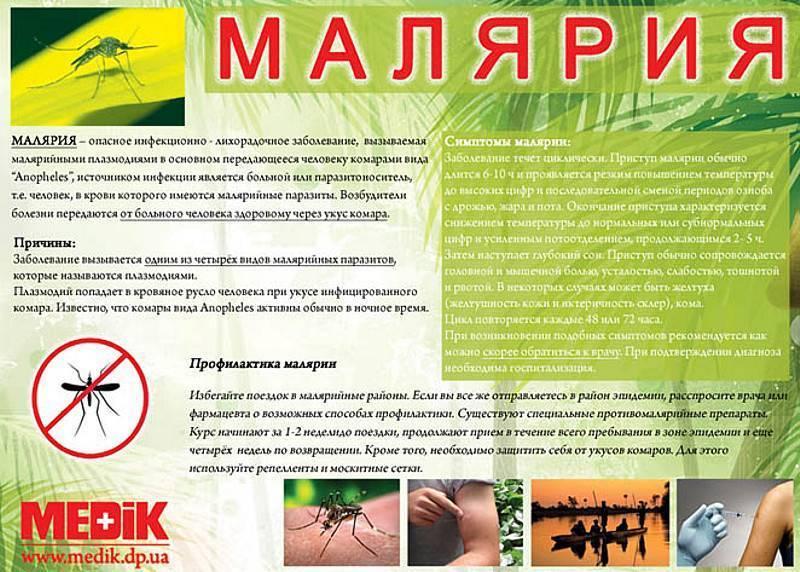 Малярийный плазмодий: стадии, виды, схема развития