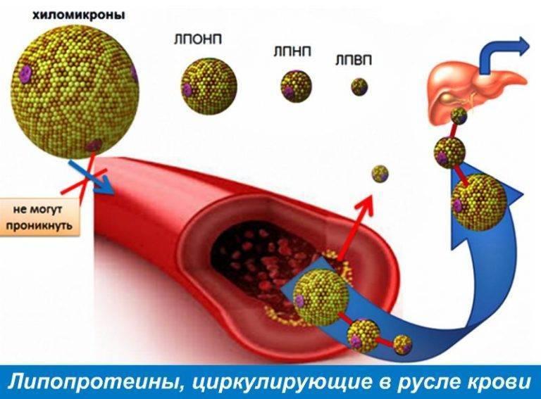 Чернослив при повышенном холестерине