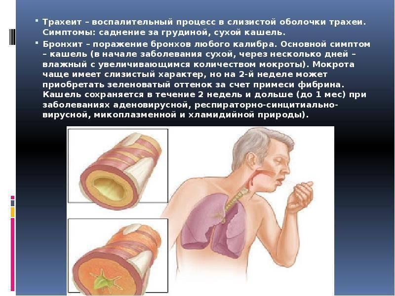 трахеидный кашель симптомы