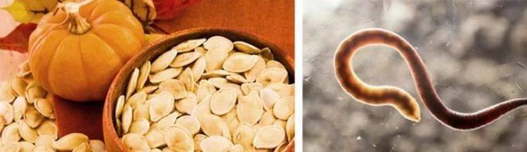 помогают ли тыквенные семечки от глистов