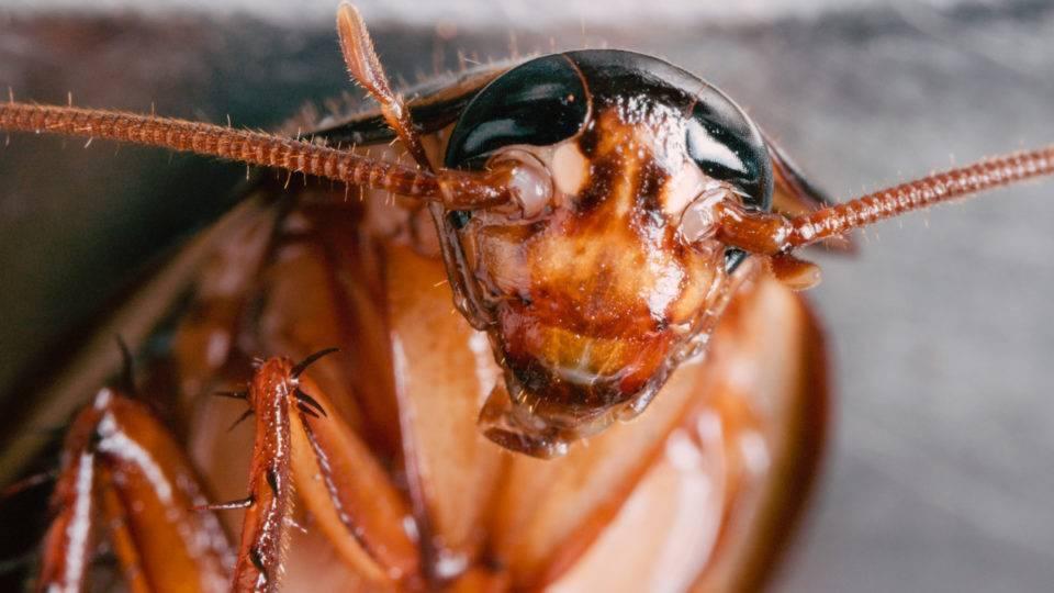Боязнь насекомых: причины возникновения, симптомы и лечение