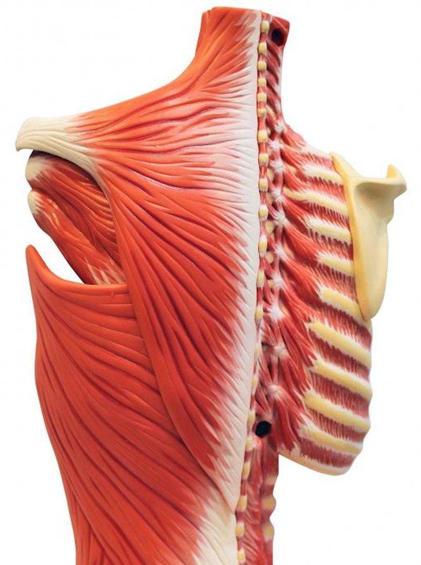 Мышечная невралгия симптомы и лечение