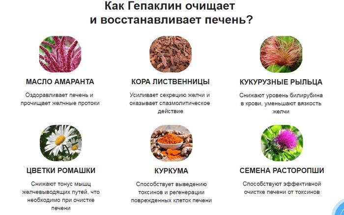 какие продукты любит печень человека