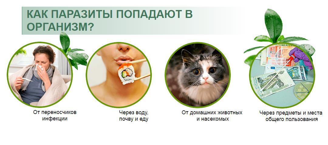 Лечение паразитов в организме человека народными средствами
