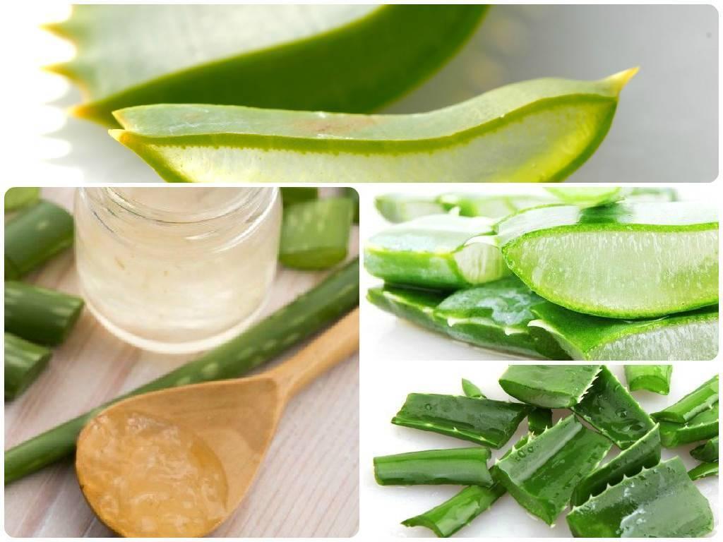 Алоэ в нос детям: рецепты средств из сока растения, и надо ли разводить, можно ли применять для лечения насморка у грудничков, как правильно сделать и закапать?
