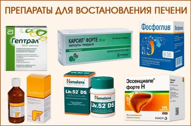 восстановление печени после антибиотиков препараты