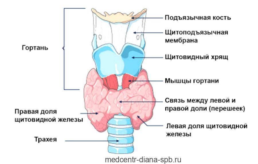 Лечение неоднородной структуры щитовидной железы
