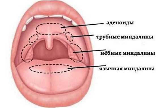 В чём разница между аденоидами, миндалинами и гландами