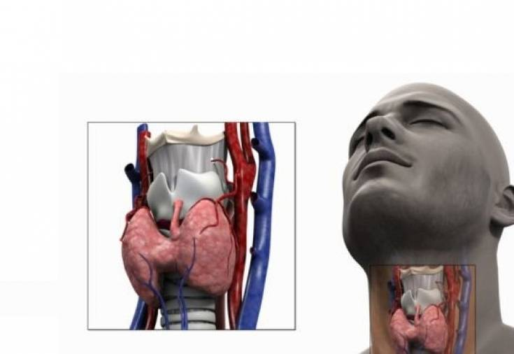 19 тревожных признаков проблем с щитовидной щелезой