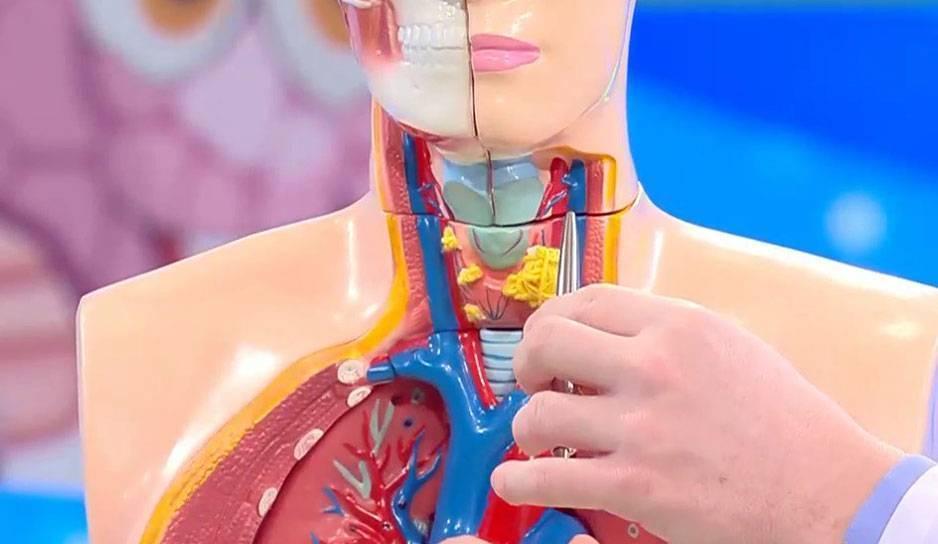кашель и щитовидная железа