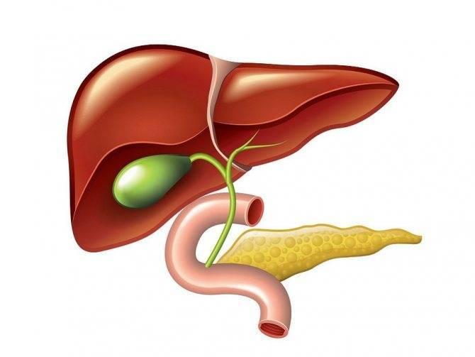 Дискинезия желчевыводящих путей: симптомы, лечение и профилактика заболевания