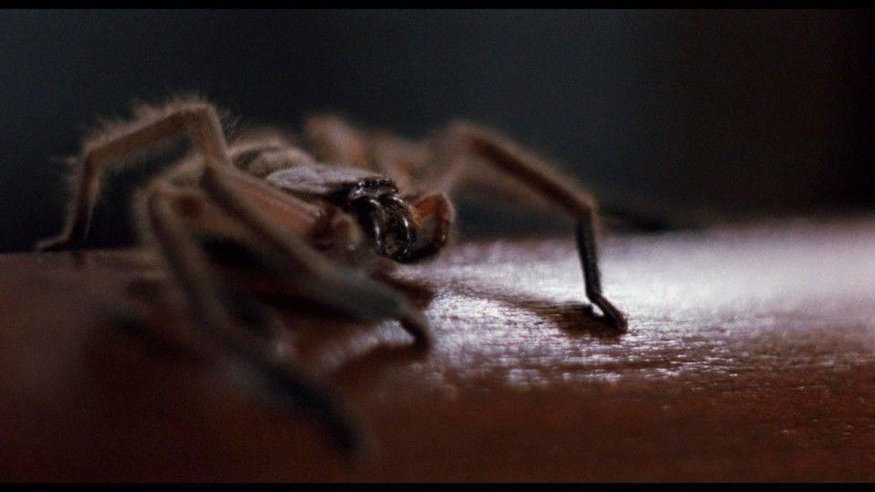 фобия боязнь пауков как называется