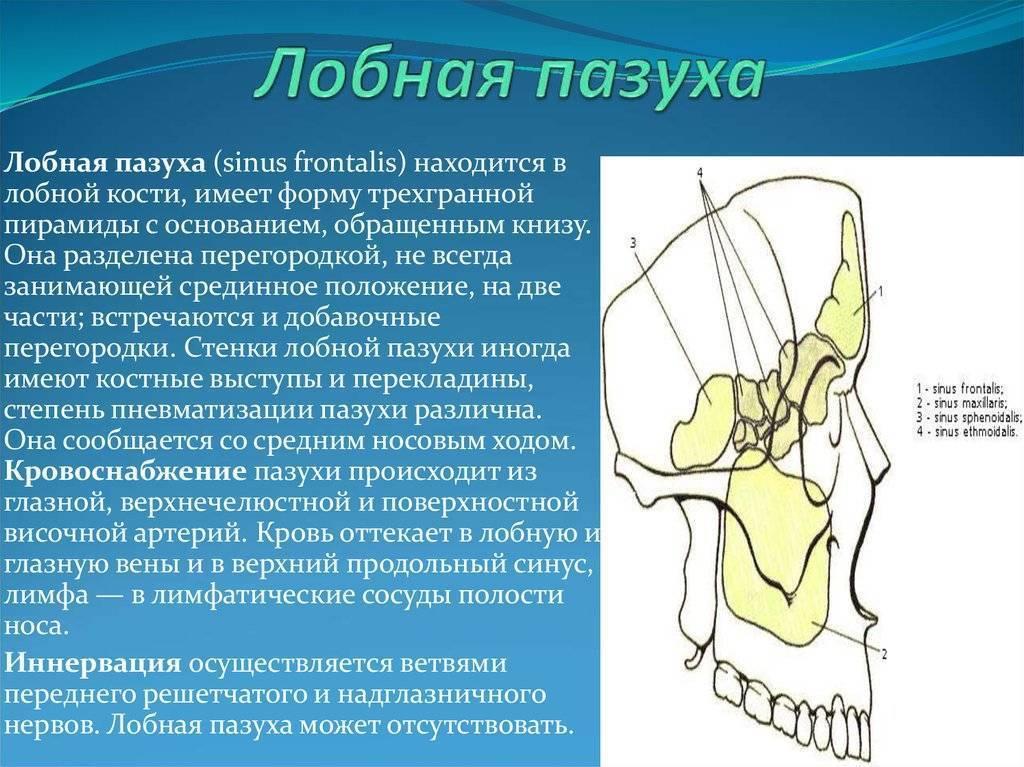 Аномалии развития околоносовых пазух - симптомы болезни, профилактика и лечение аномалий развития околоносовых пазух, причины заболевания и его диагностика на eurolab
