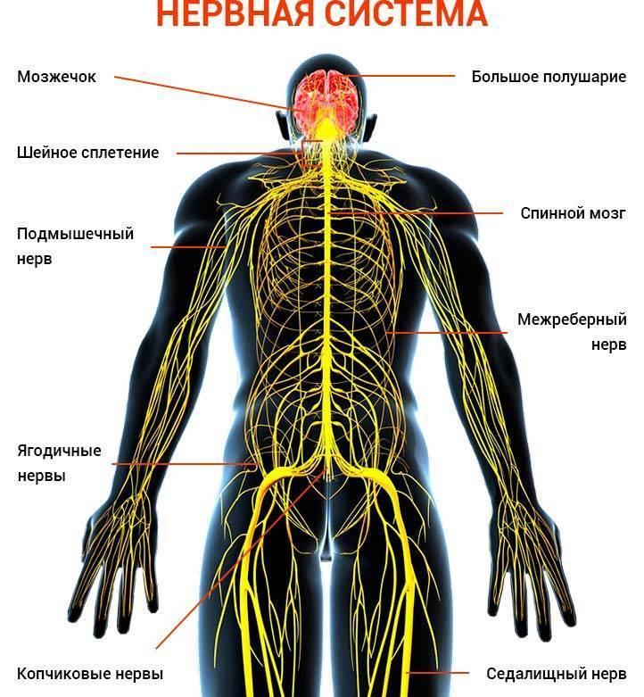 Панические атаки при шейном остеохондрозе: причины, лечение
