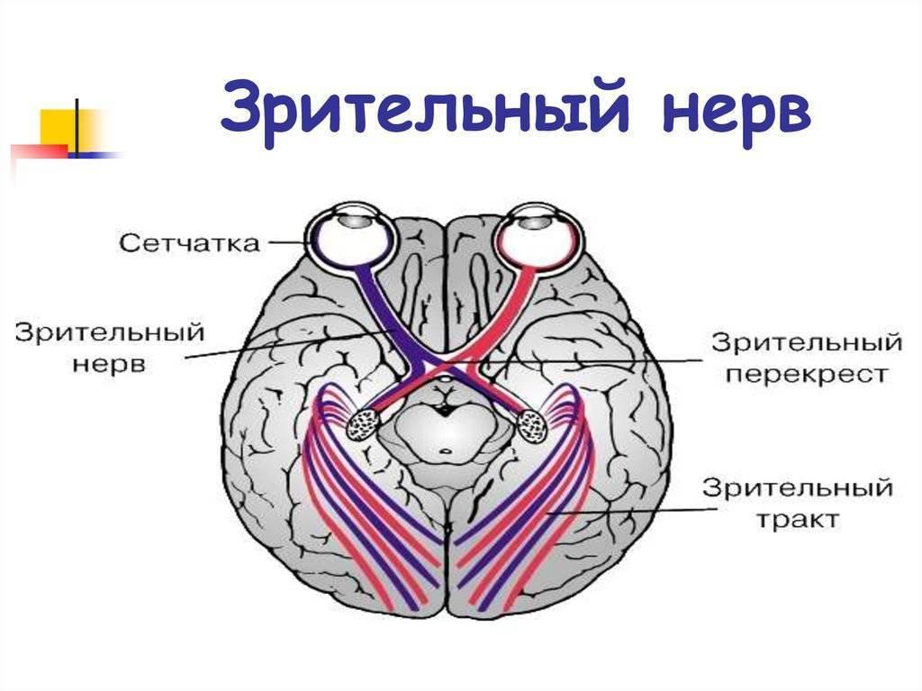 нерв глазной