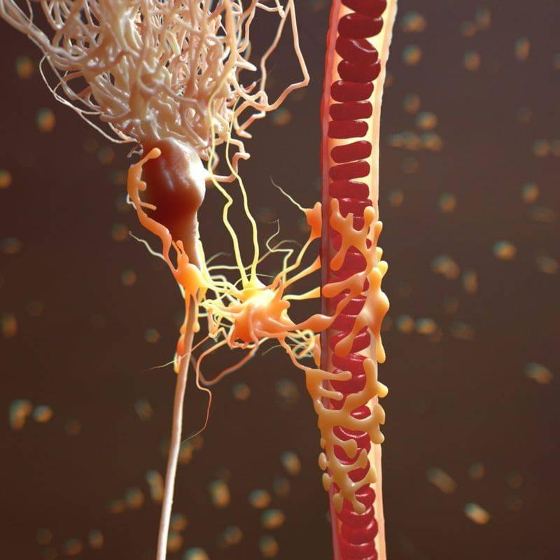 Разновидности глистов и простейших паразитов в крови