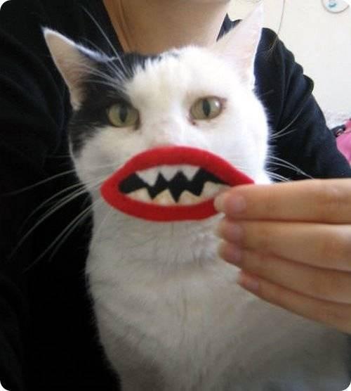 Айлурофобия – боязнь кошек