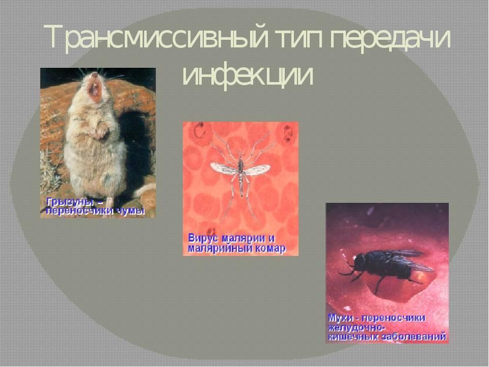 Разновидности передачи инфекции